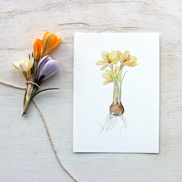 Yellow crocus print by watercolor artist Kathleen Maunder