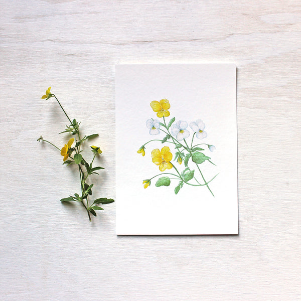 Print of botanical painting depicting yellow and white violas by watercolour artist Kathleen Maunder