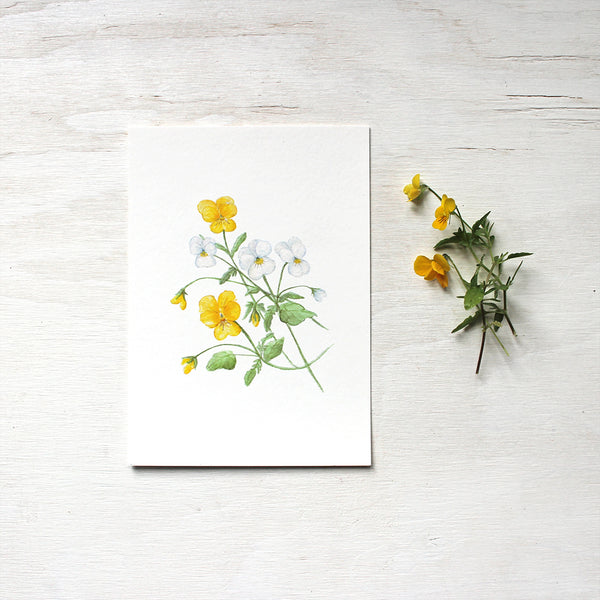 Print of watercolor painting depicting yellow and white violas by artist Kathleen Maunder