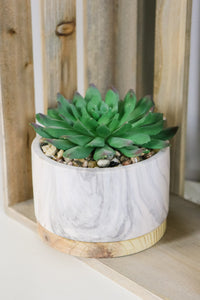 Succulent w/Marble Wood Base - JQ Clothing Co. - Oakes, ND
