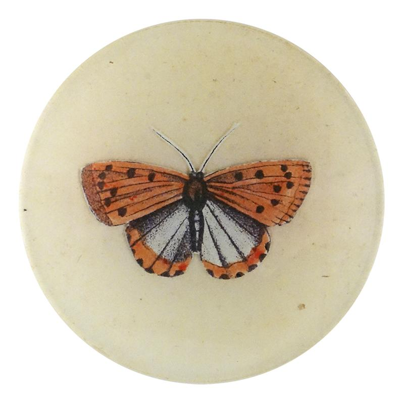"John Derian :: 4"" Round Dish, Coral Butterfly"