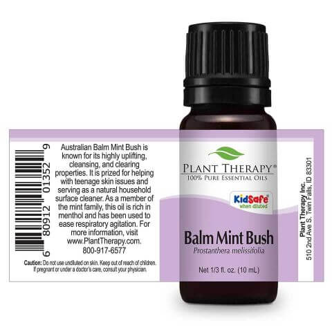 Plant Therapy - Balm Mint Bush
