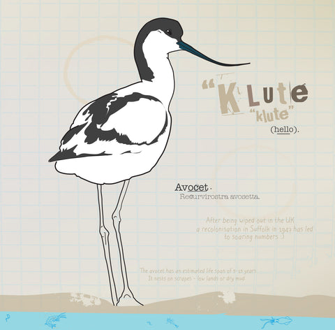 Avocet greeting card.