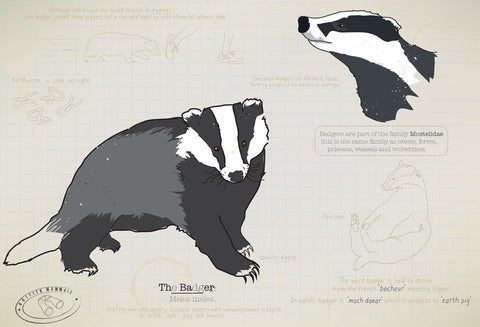 Badger Ltd Ed. print