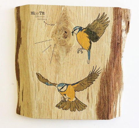 Flying Blue tit wood art
