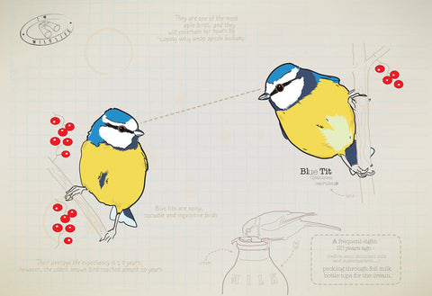 Blue tit Ltd Ed. print