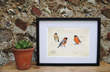 Bullfinch Ltd Ed. print