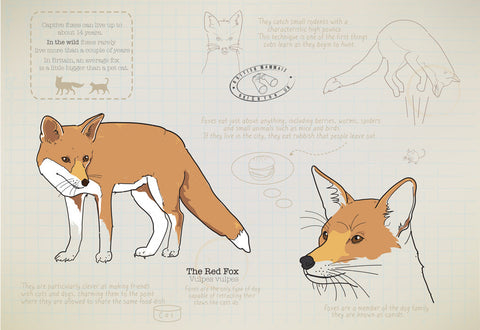 Fox Ltd Ed. print