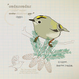 Goldcrest greeting card.