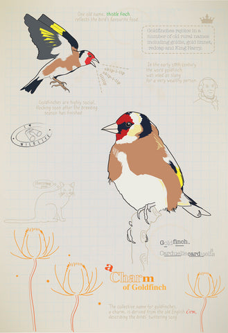 Goldfinch Ltd Ed. print