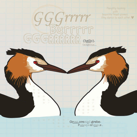 Great Crested Grebe greeting card.