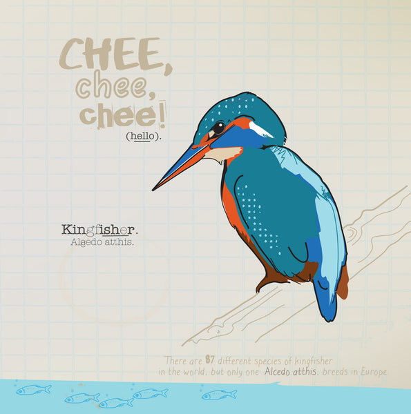 Kingfisher greeting card.