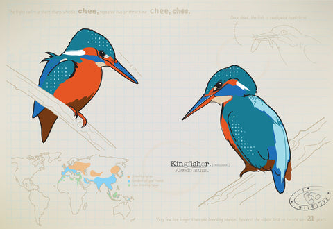 Kingfisher Ltd Ed. print