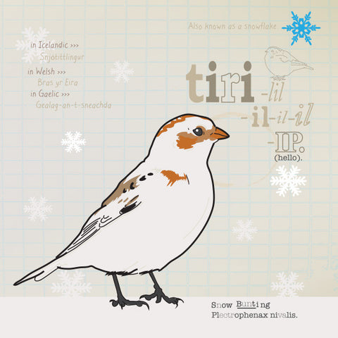 Snow Bunting greeting card.