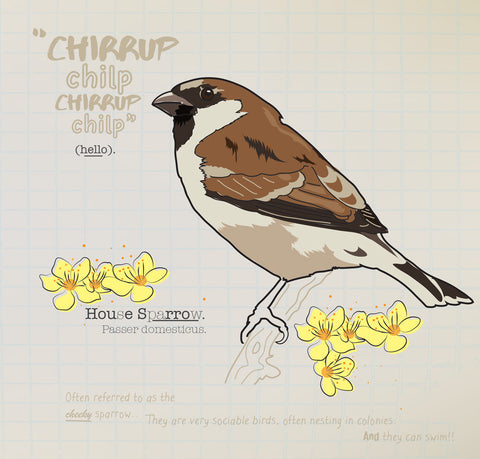Sparrow greeting card.