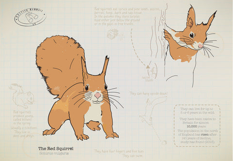 Red squirrel Ltd Ed. print