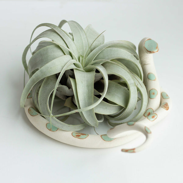 Large Ceramic Snake With Plant - Sylvia