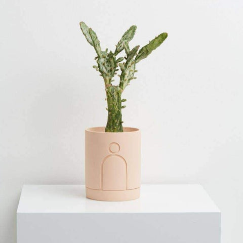 Etch Planter - Salt