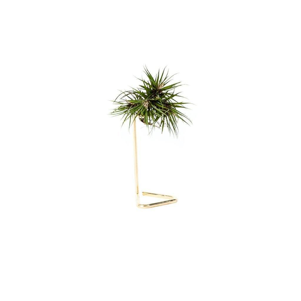 Copper Gold Air Plant Stand Modern Vintage Style Lighting And Home Decor
