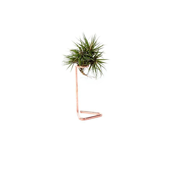 Copper & Gold Air Plant Stand | touchGOODS