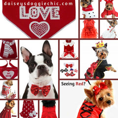 Sweethearts Holiday Pet Fashion Seeing Red