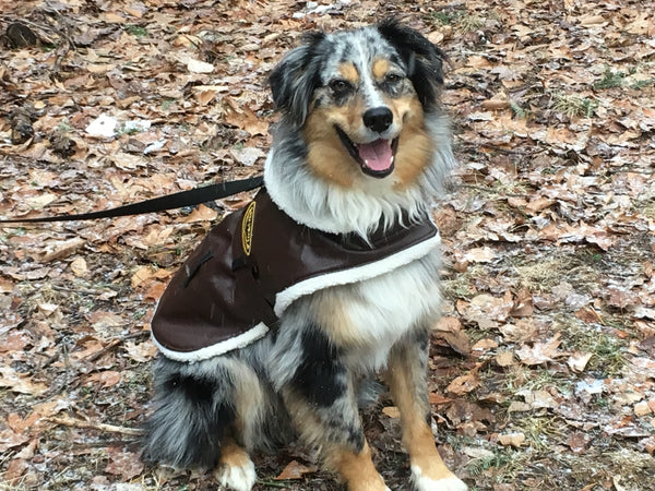australian shepherd dog models aviator bomber leather jacket harness