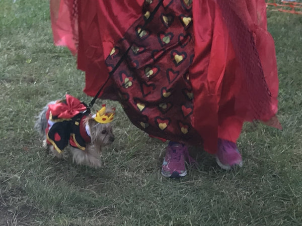 Nan's Little Dog modeling queen of hearts pet costume at dog competition