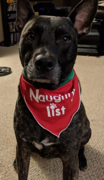 dog modeling naughty or reversible nice bandana