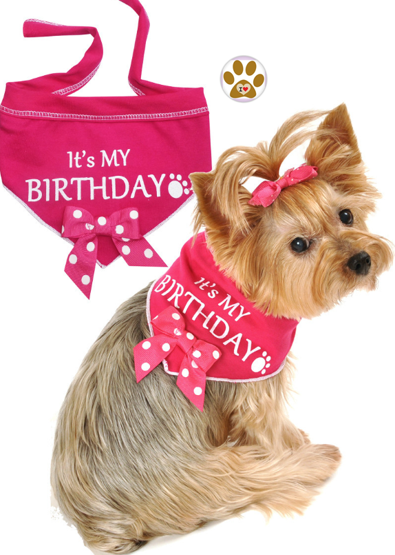 It's My Birthday (Girl) Bandana Scarf with Pin in color Pink/White - Daisey's Doggie Chic