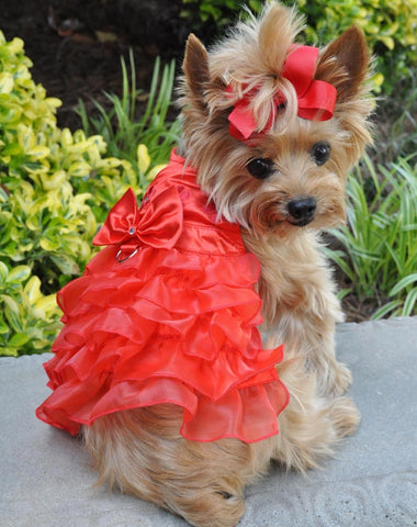 Beautiful Holiday Red Satin Organza Party Harness Dress comes with matching leash & accessory - Daisey's Doggie Chic