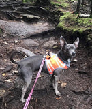 "American River ""Sport Neon"" Iridescent Orange Ultra Choke Free Step-in Harness Vest - Daisey's Doggie Chic"