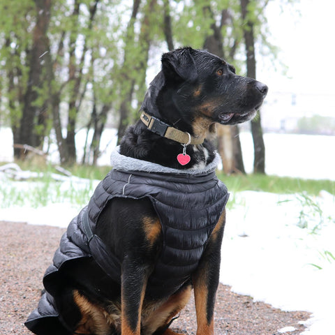 https://cdn.shopify.com/s/files/1/0883/0244/products/Quilted_Puffer_Jacket_DD_for_Bog_Dogs_black_on_model_front_large.jpg?v=1511652942