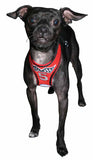Racing Team Ultra Mesh Choke-Free Halter Harness in Red - Daisey's Doggie Chic - 2