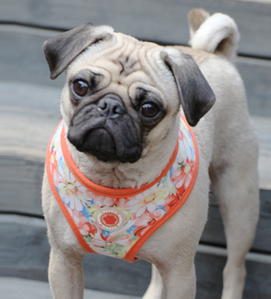 Spring Garden Floral Choke-Free, Step-in Harness Vest Jacket in Orange Floral - Daisey's Doggie Chic