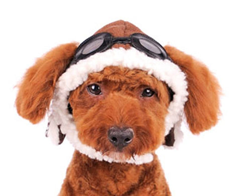 Aviator Hat with Goggles for Dogs - Daisey's Doggie Chic
