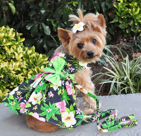 Black Hibiscus Hawaiian Floral Party Harness Dress with Charm and matching Leash - Daisey's Doggie Chic