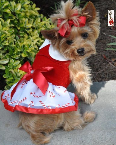 Mrs. Santa Claus Holiday Candy Harness Dress with Charm and Leash  - Candy Cane Red - Daisey's Doggie Chic