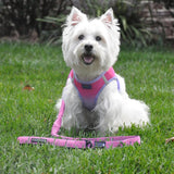 "Soft Pull Traffic Leash with Soft Grip Handle - 4ft plus 6"" stretch extension x 1"" wide - Available in 5 colors - Daisey's Doggie Chic"