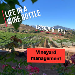 Wine tasting - life in a wine bottle - podcast wine