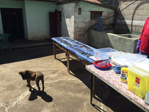 cleaning dental instruments in Guatemala
