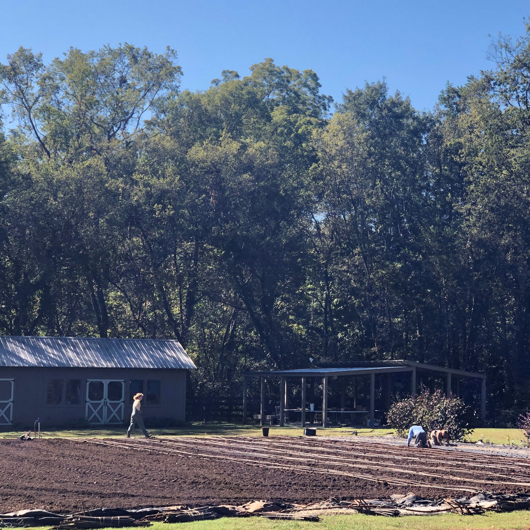Preparing Your Growing Space for Fall Flower Planting and Cover Crops
