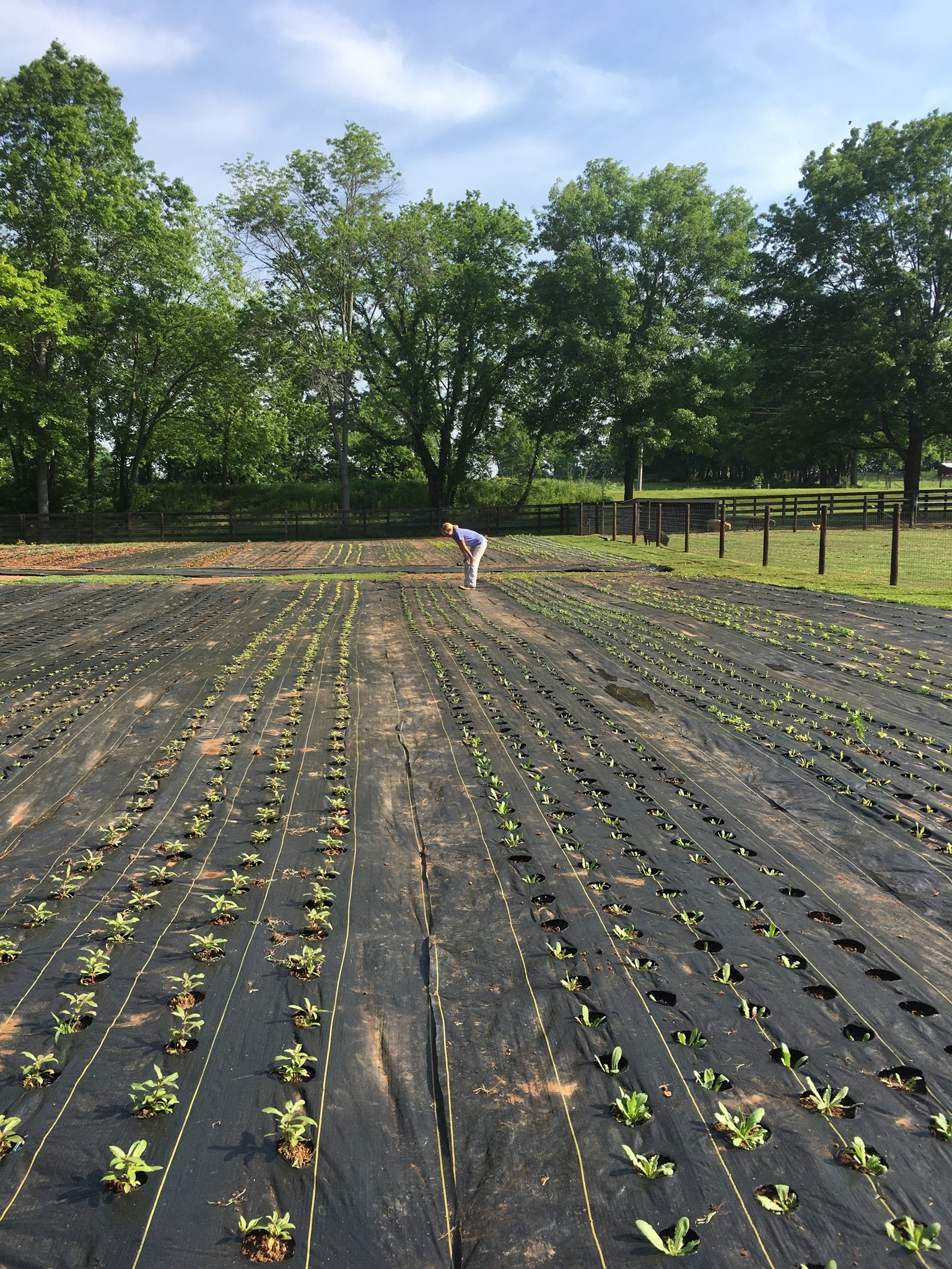 Prepping the 1818 Farms Flower Garden