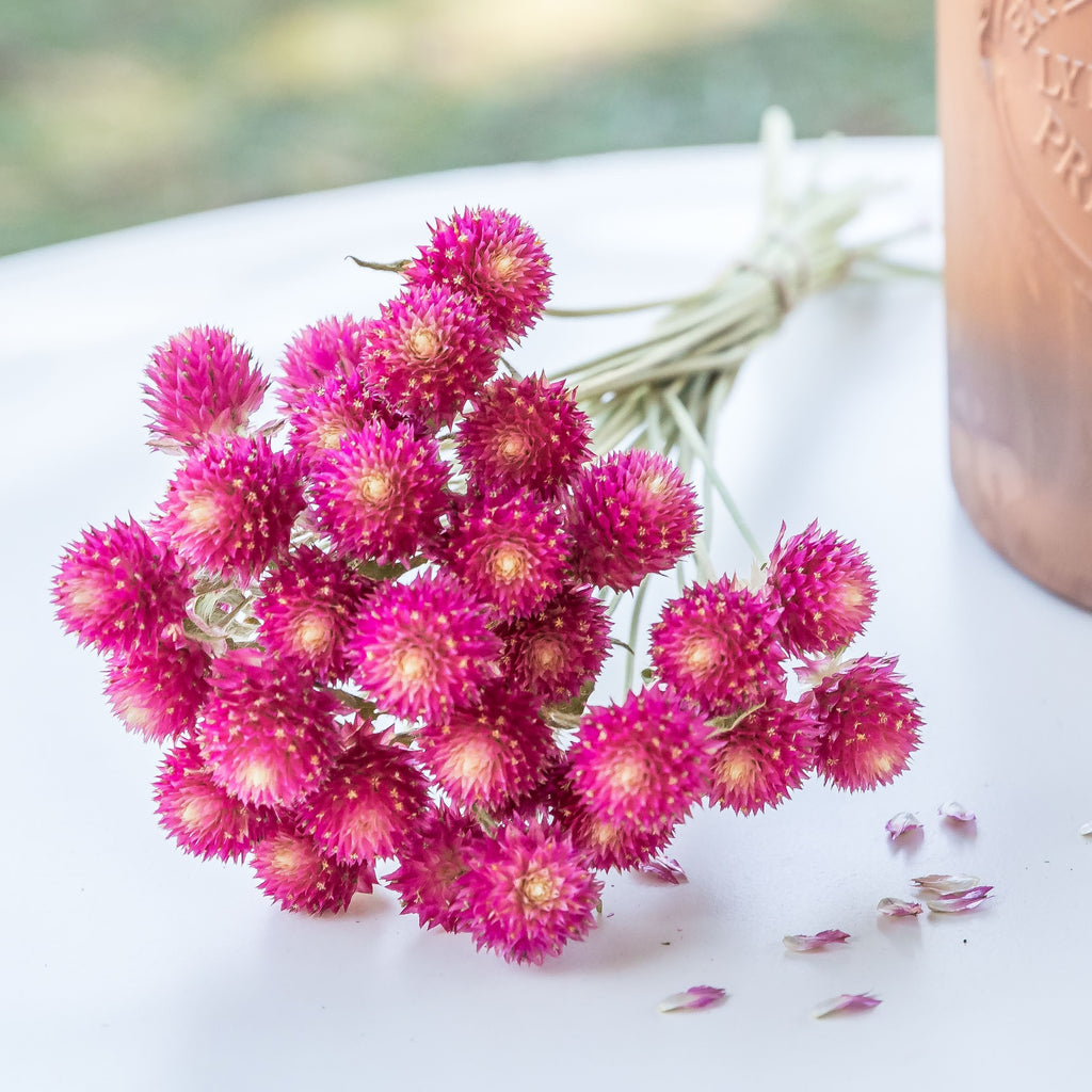 Dried Gomphrena/Globe Amaranth Bundle - Carmine/Hot Pink