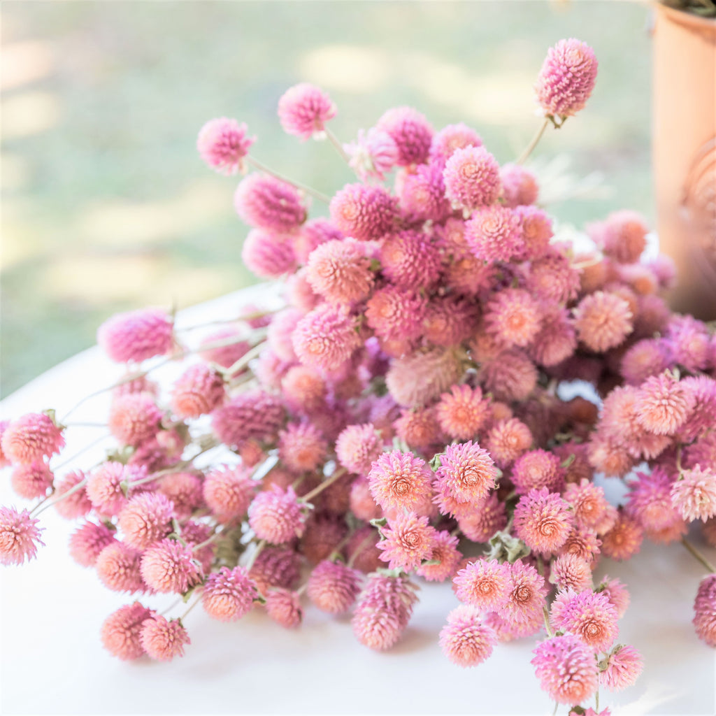 Dried Gomphrena/Globe Amaranth Bundle - Mauve