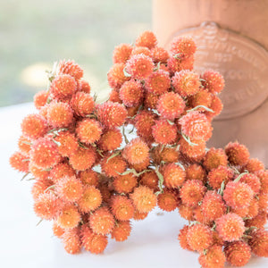 Dried Gomphrena/Globe Amaranth Bundle - Orange/Peach