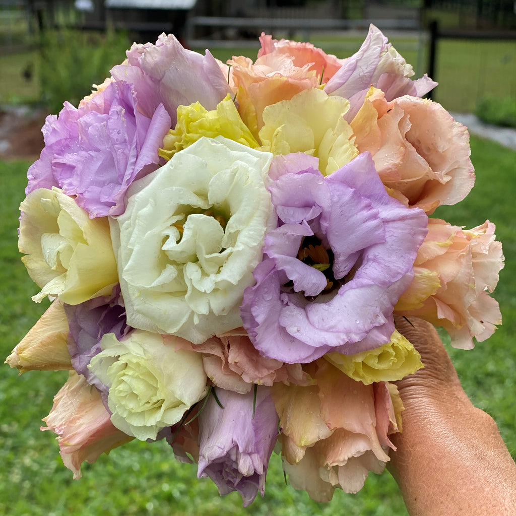 Bouquet of the Day