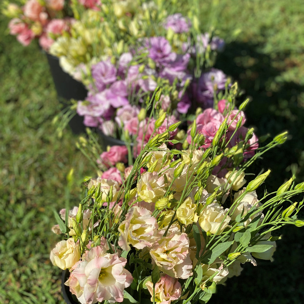 1818 Farms Blooms By The Bucket