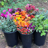 Blooms by the Bucket (50% Deposit)