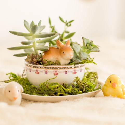 Succulent Teacup Gardening Workshop