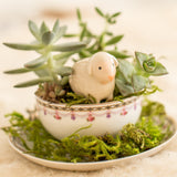 Succulent Teacup Gardening Workshop (Hosted at The Cupboard)